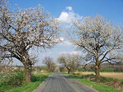 wiosenna aleja Wojsławice