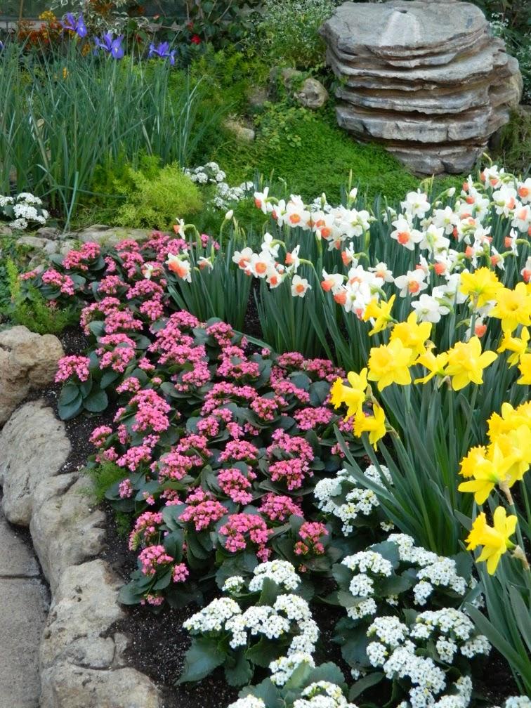 Centennial Park Conservatory Spring Flower Show 2014 daffodil cyclamen garden muses-not another Toronto gardening blog