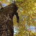 L'Olmo, albero sacro, purificatore, e ingrediente di antichi medicamenti