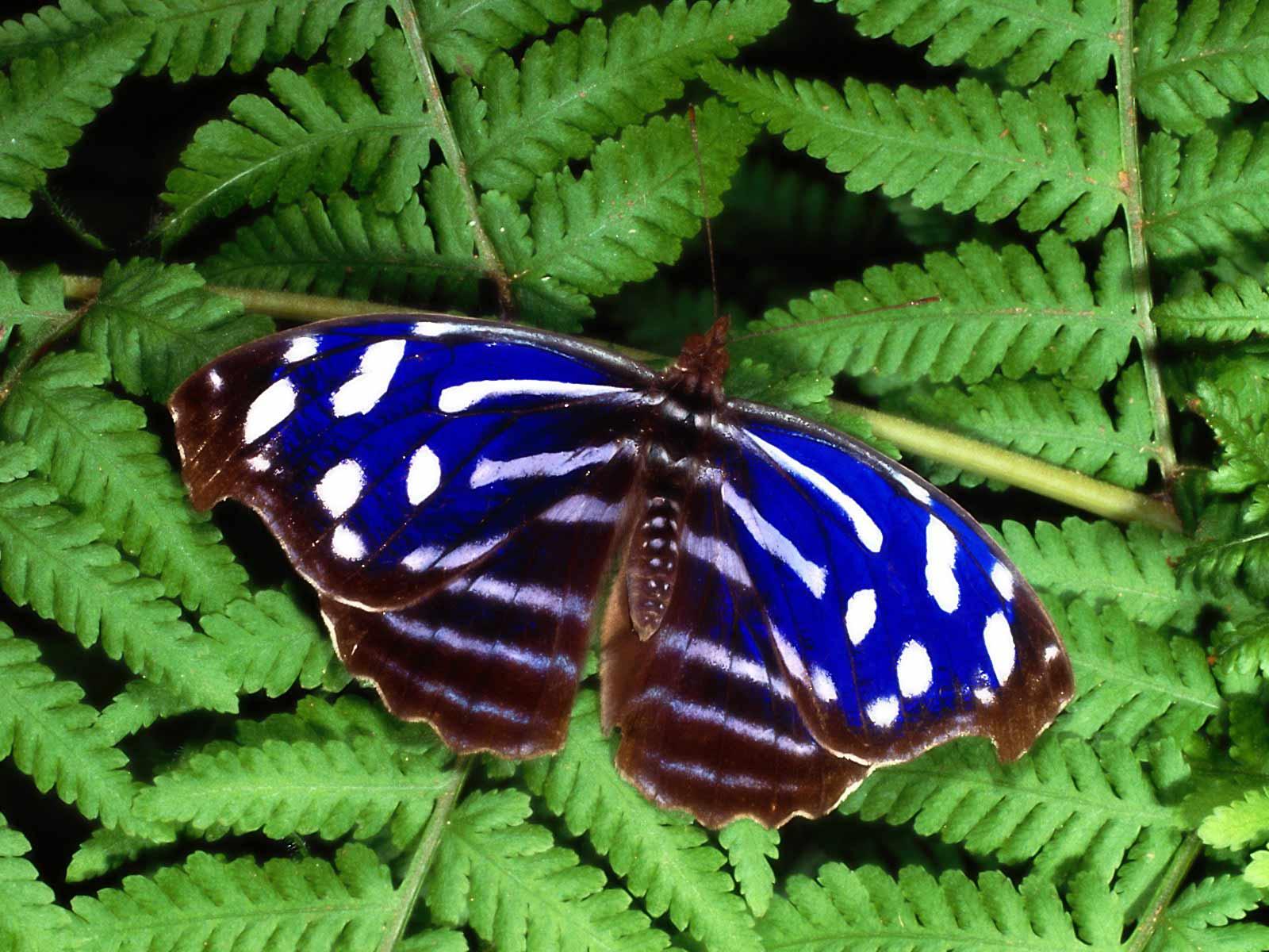 http://1.bp.blogspot.com/-czy_TUNys6U/TzmCV6uhtLI/AAAAAAAAEcg/ewDkMYw3i40/s1600/The-best-top-desktop-butterflies-wallpaper-hd-butterfly-wallpaper-39.jpg