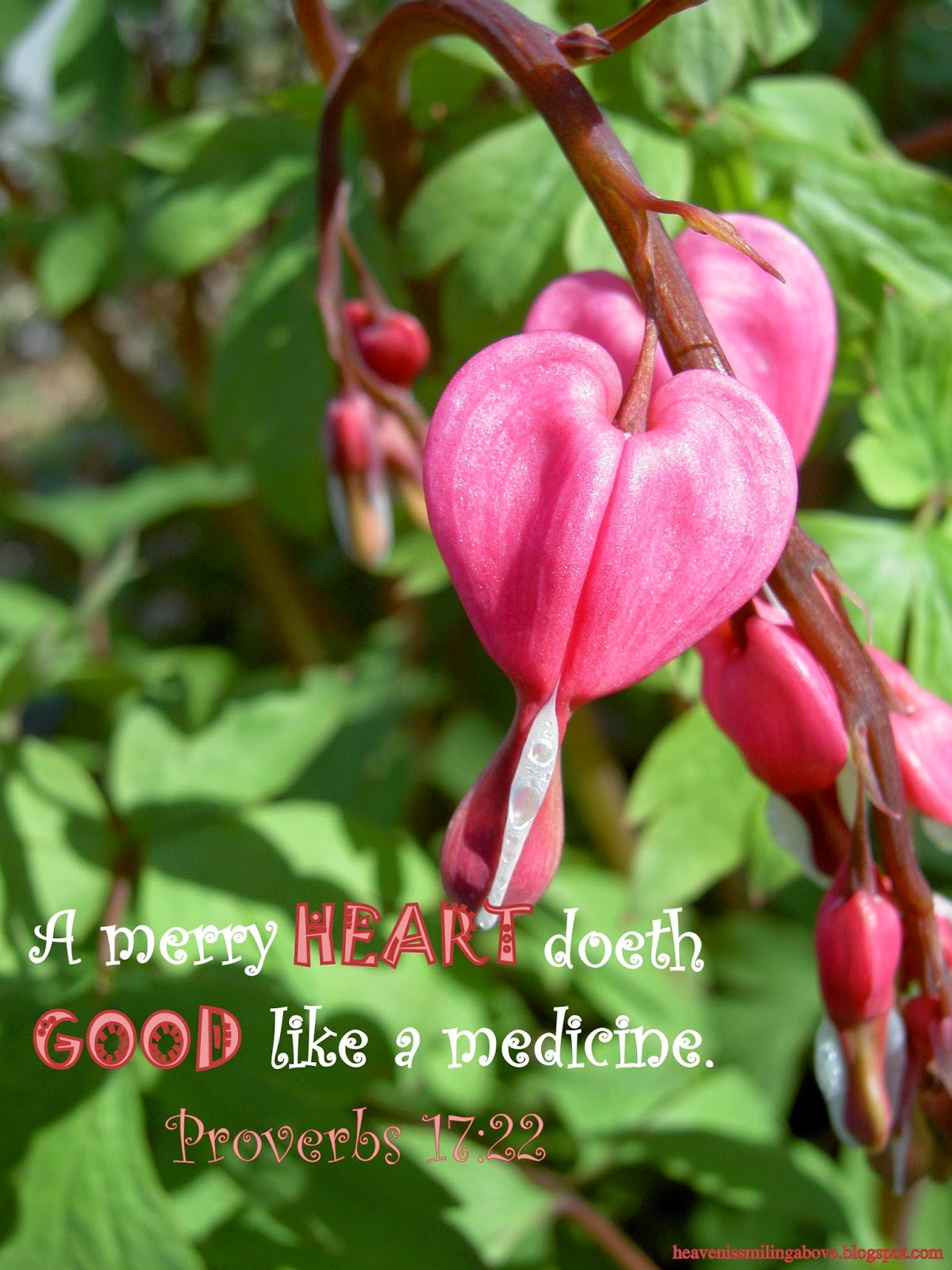 A merry heart doeth good like a medicine proverbs 17:22