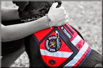 diabetic alert dog vest