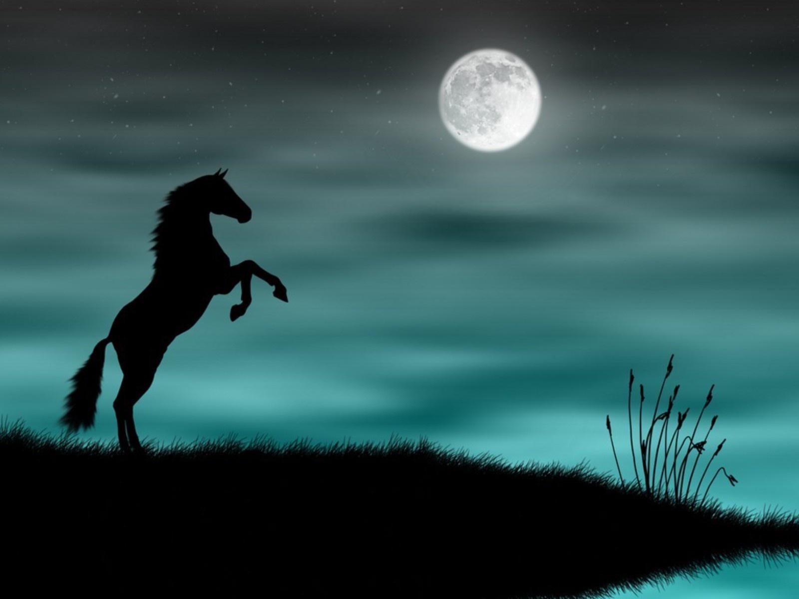 Wallpapernarium Caballo Salvaje En La Noche Con Luna Llena Wallpaper