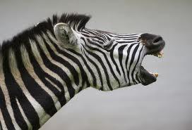 Hình ảnh động vật la hét cực hài hước