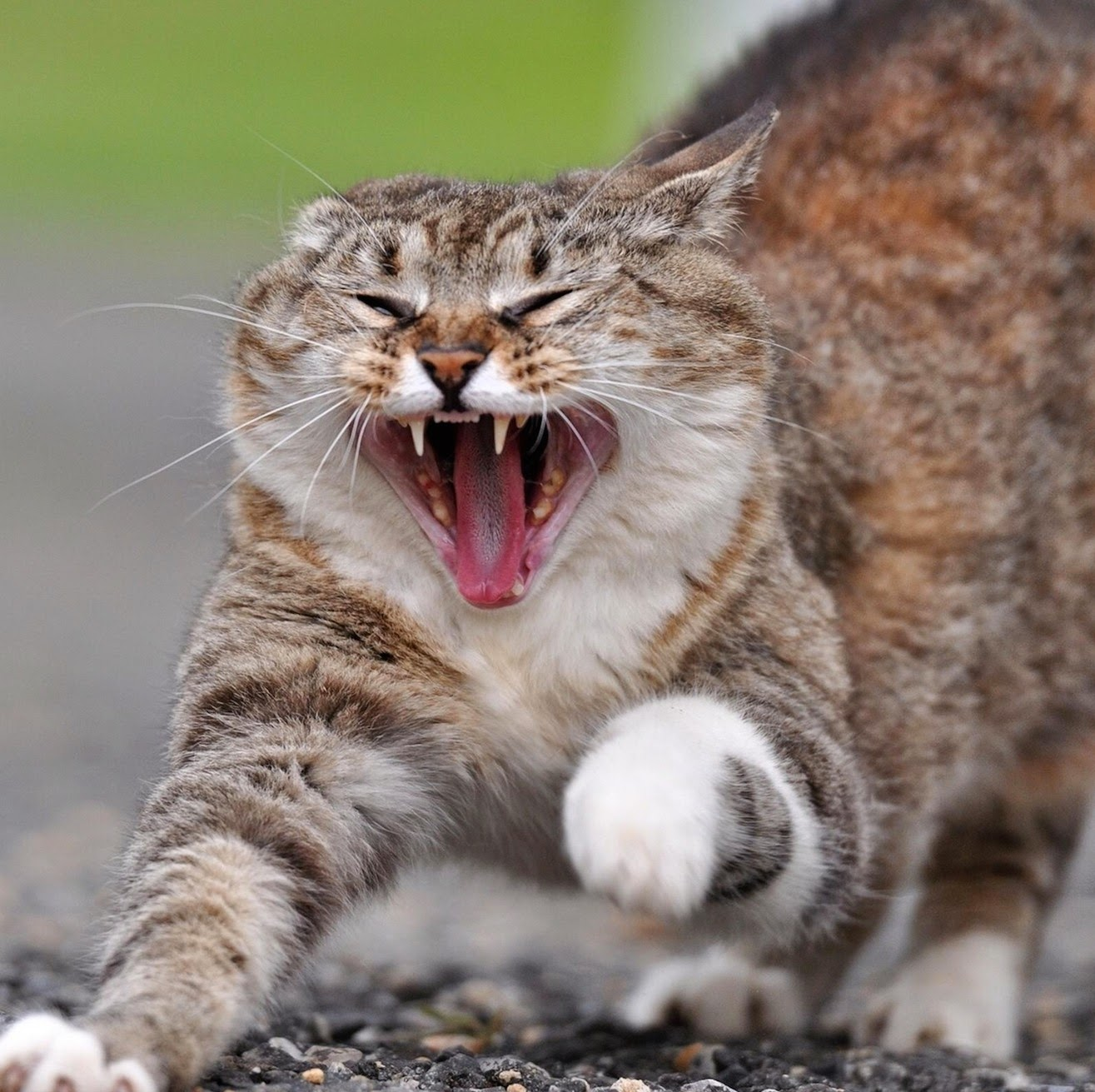 Can A Diabetic Cat On Insulin Eat Dry Food