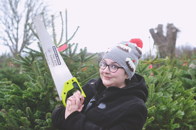 Cut your own Christmas tree farm in Surrey