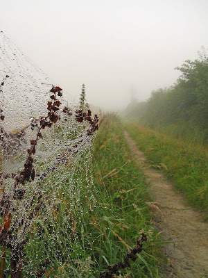 Cobwebs, moisture and mist on the first track of the walk