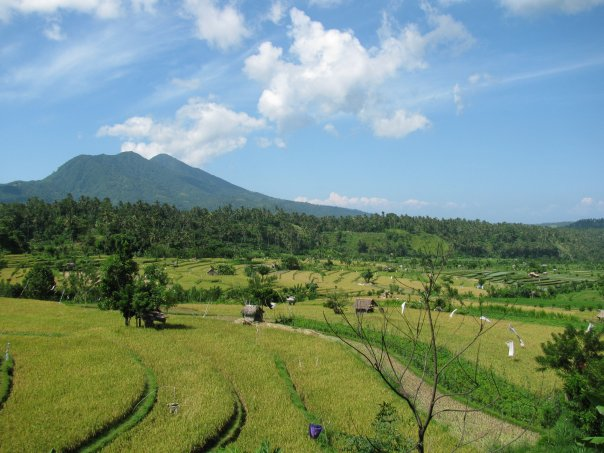 terraced rice fields in Tirta Gangga