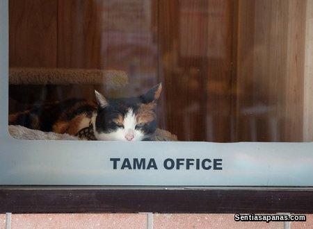 Tama Office