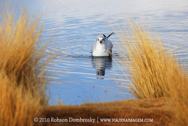 fauna das lagunas em lipez bolivia