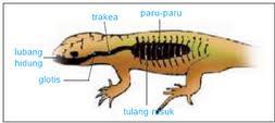 reptil.png
