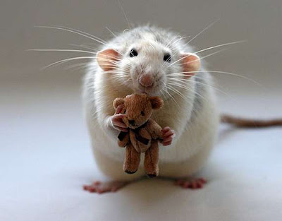 white mouse holding a brown teddy bear
