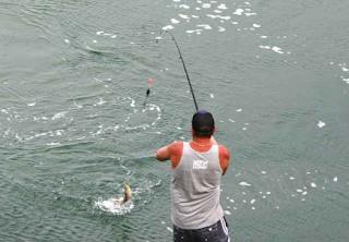 57 Umpan Mancing Jitu Ikan Patin di Sungai dan di Kolam Terbaik se Indonesia
