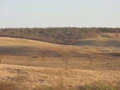 Área de caatinga com pastagem
