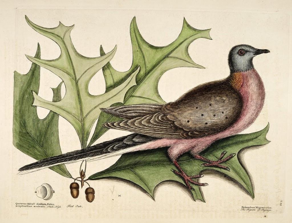 biodiversity heritage library 2014 remembering extinct species