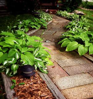 camino de ladrillos rodeado de plantas