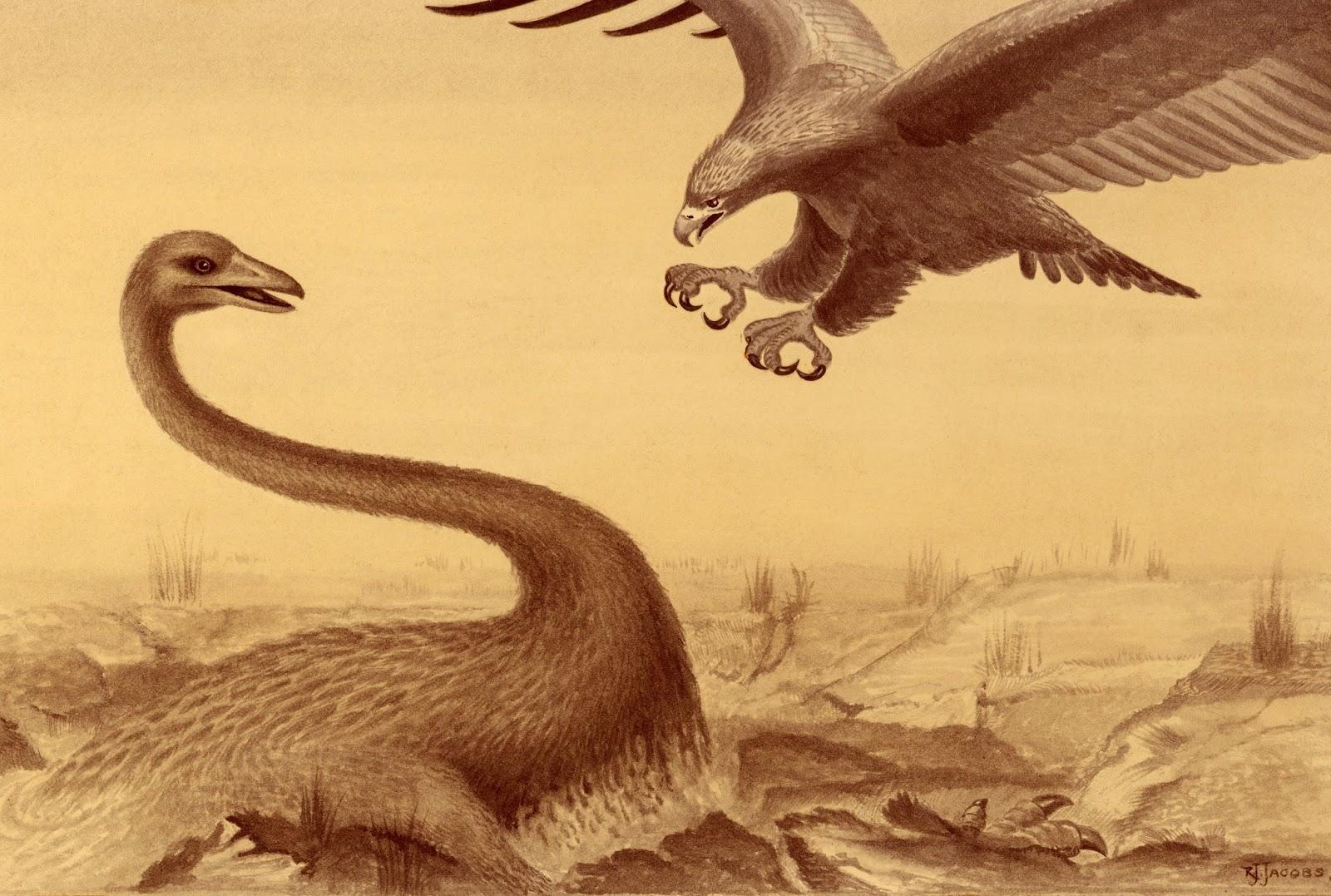 gambar burung garuda terbesar - foto hewan