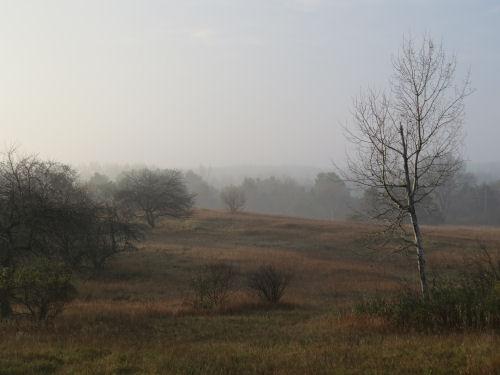 foggy backyard