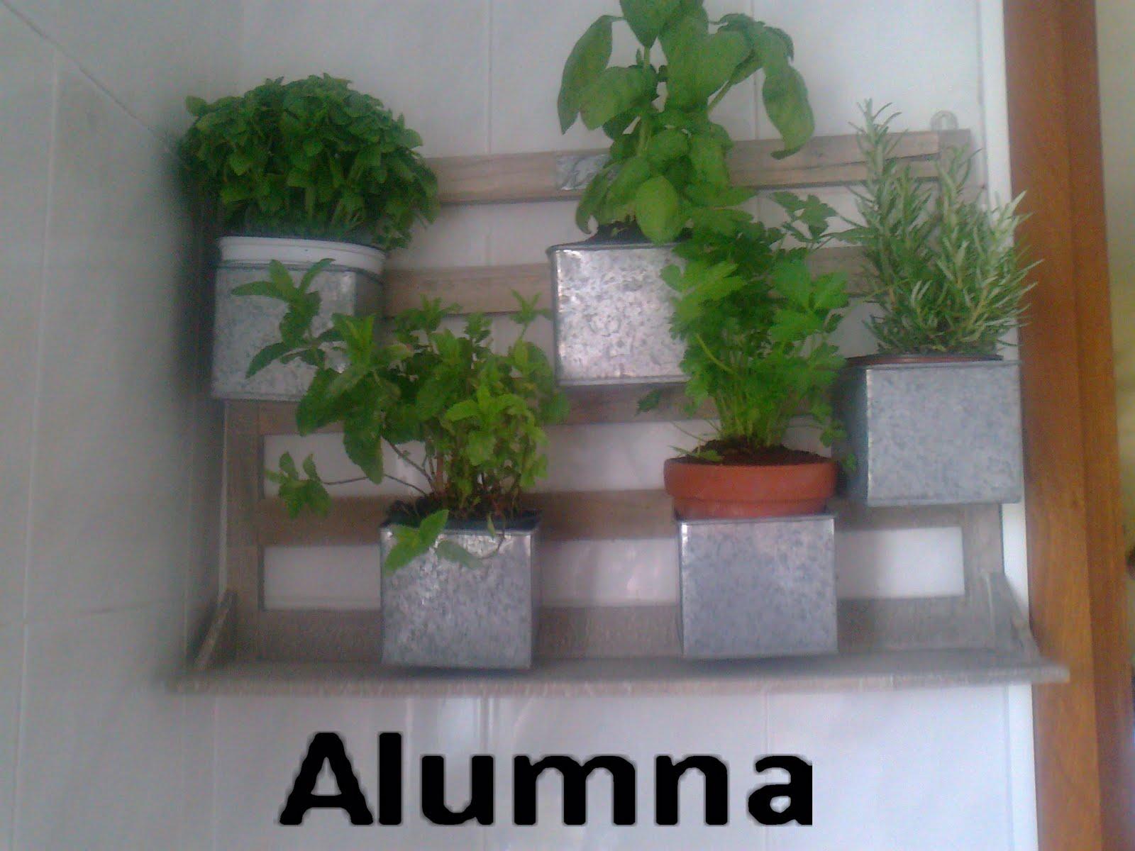 Mis plantas arom ticas en la cocina mi bit cora - Plantas aromaticas en la cocina ...