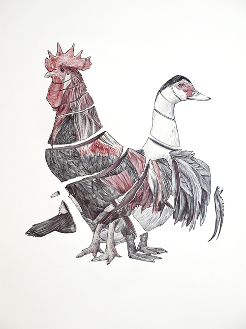 08-Rooster-and-Duck-Jaume-Montserrat-Illustrations-of-Ribbon-Animals-in-Emptyland-www-designstack-co