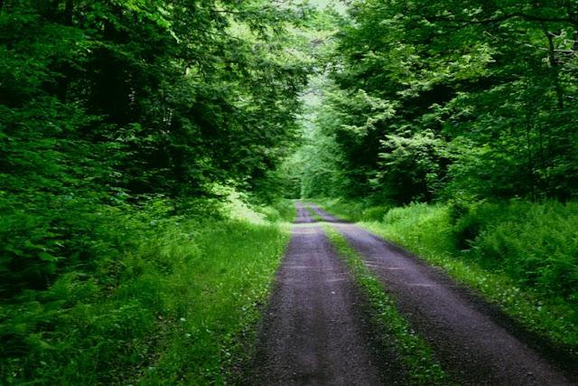hutan wisata camplong