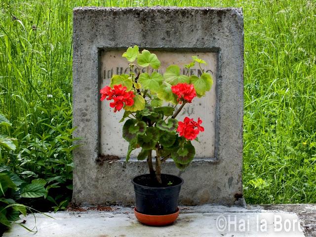 muscata mormant cimitir calnic covasna