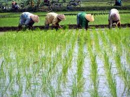 Lima Masalah Pokok yang Membuat Pertanian di Indonesia Terus Merugi