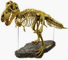 Chiste de Gallegos, prestigioso, museo, gallego, turistas, esqueleto,  tiranosaurus, millones, años.