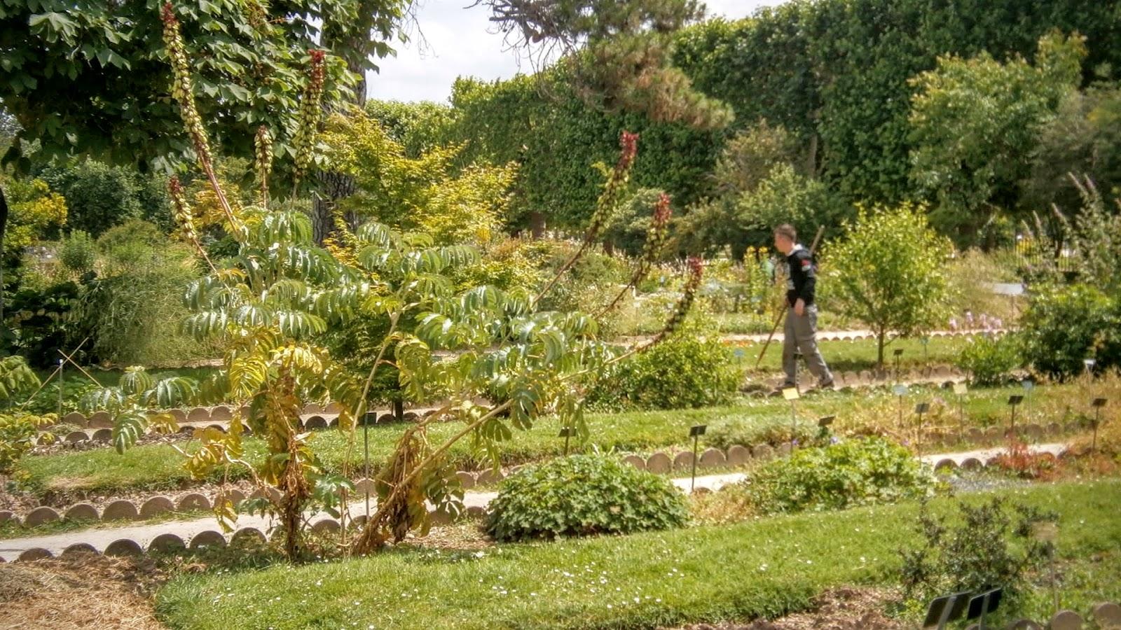 A paris et ailleurs all es plant es au jardin des plantes for Au jardin paris