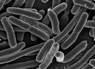 Desarrollo y crecimiento de microorganismos