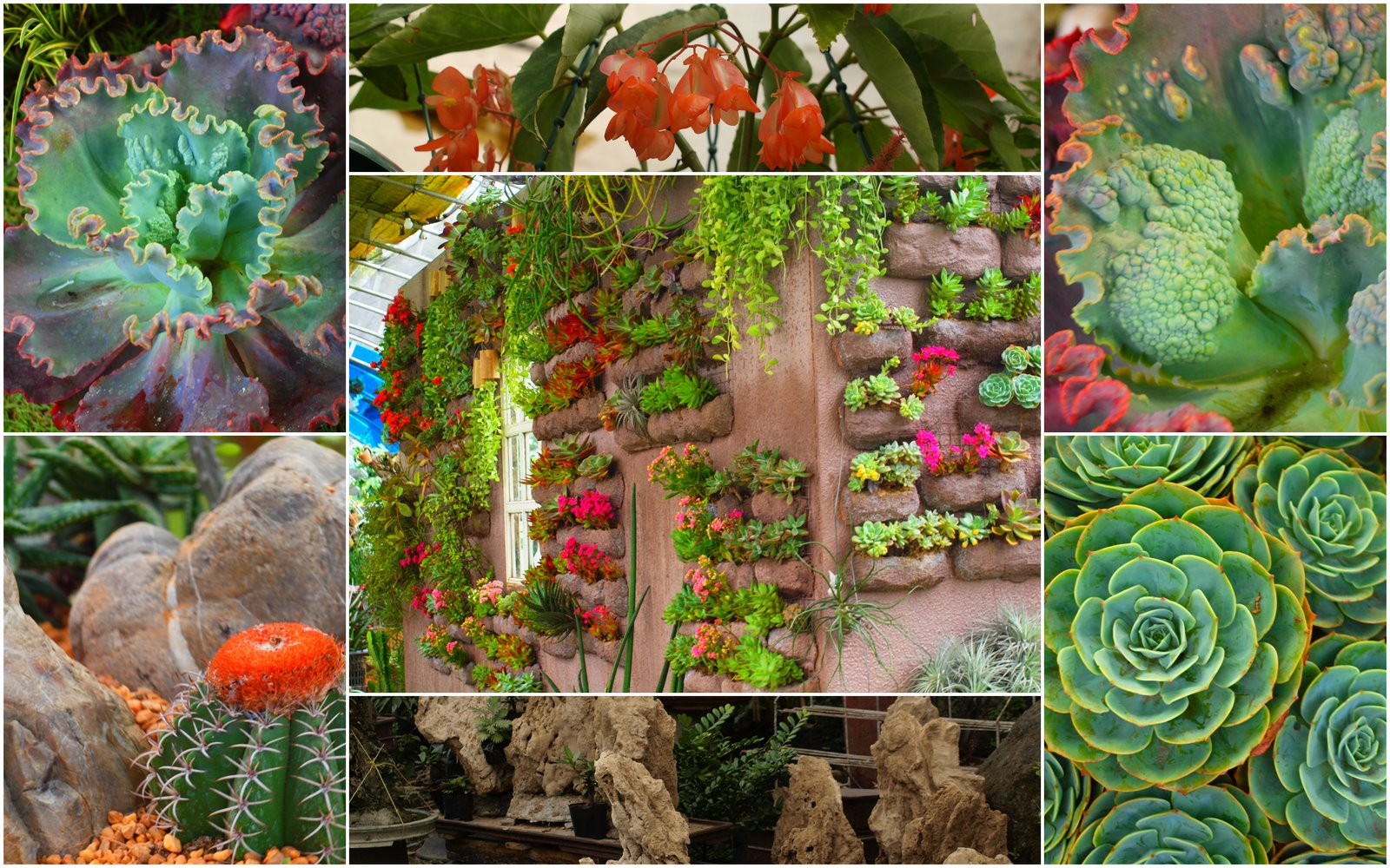 Andrea 39 s plants photos and travels succulents agaves for Philippine garden plants