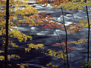 Maple Leaves River Wallpaper 1600x1200