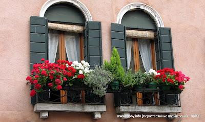 Герань на окне by TripBY