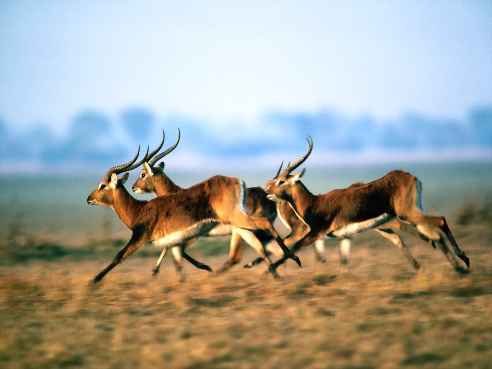 Antelope | The Biggest Animals Kingdom