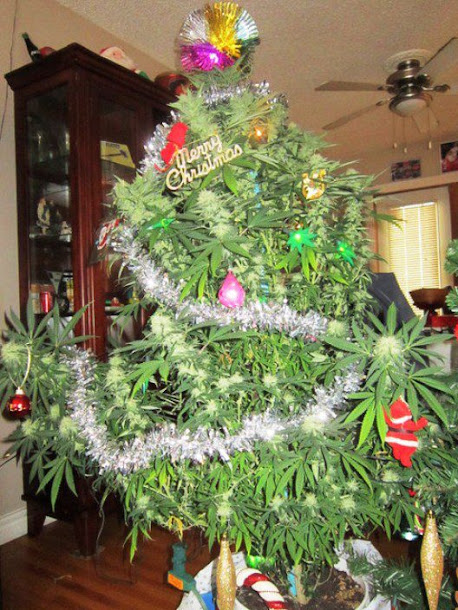 Marijuana Christmas