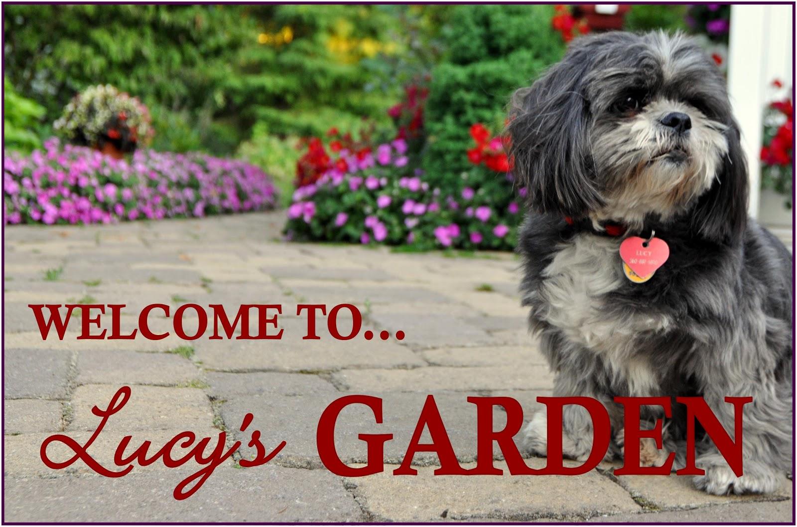Lucy S Garden