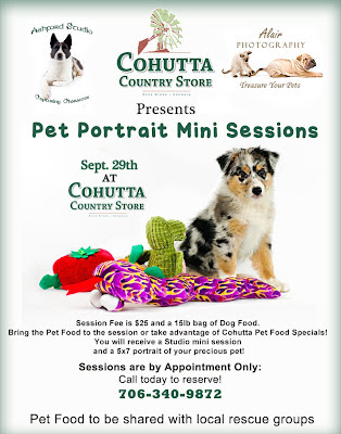 Alair Photography: Treasure Your Pets: Cohutta Mini Sessions