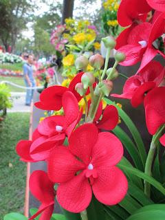 Hội hoa xuân Tao Đàn, hoa đẹp nhất 2013