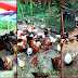 Contoh Kandang Ayam Kampung Super Sederhana Cocok Bagi Peternak Pemula