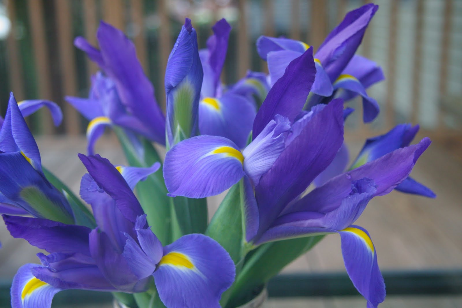 Sugar oysters friday flowers irises are sentimental because they were my maternal grandmothers favorite flower every time i see some i want to buy them the irises are so delicate and izmirmasajfo