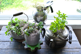 herb garden planted in old kettles via Funky Junk Interiors