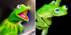 Is That You Kermit?