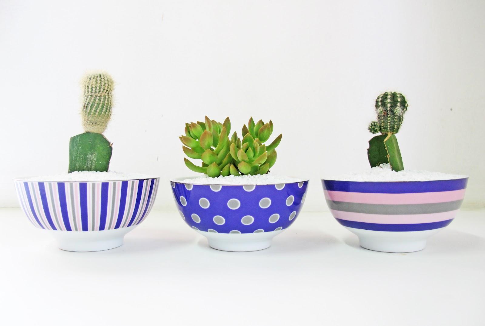 mini jardim de cactus:DECORE E TRANSFORME: CACTOS E SUCULENTAS NA DECORAÇÃO