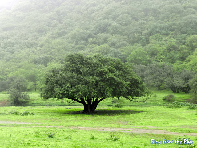 Salalah in Khareef - the monsoon season
