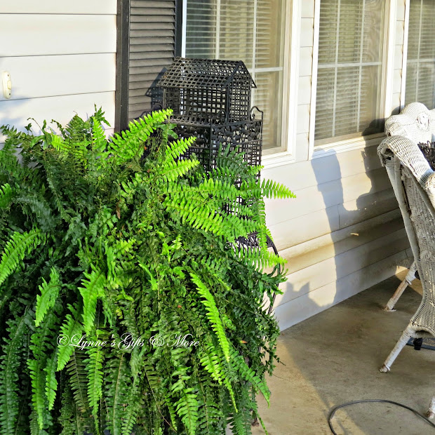 Lynne's Gifts From the Heart: Late Fall Boston Ferns on the Front Porch