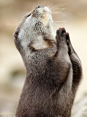 OTTER PRAYING