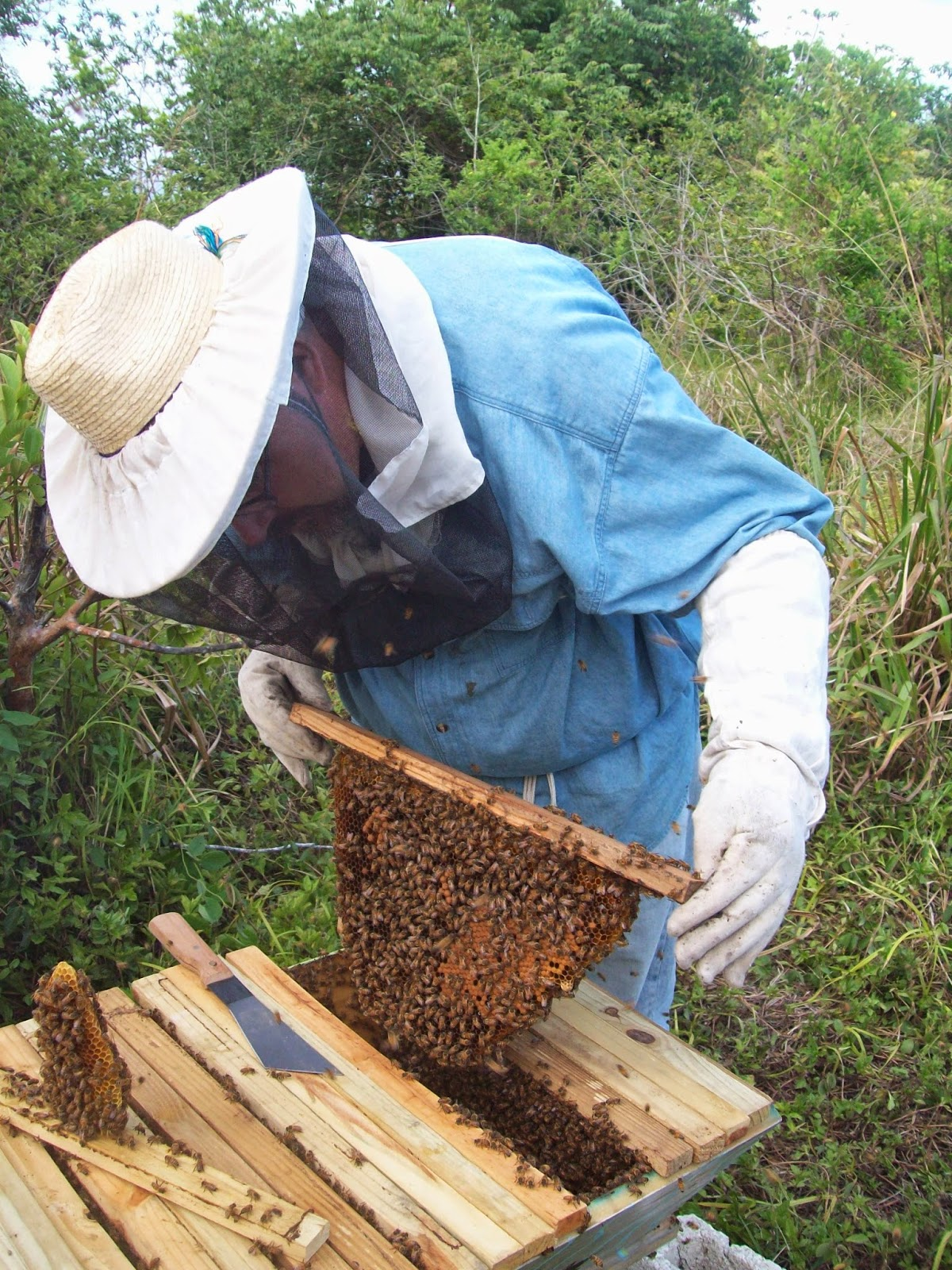 Below I Muse About The Reasons I Use Top Bar Hives For My Beekeeping And  Enjoy Promoting Them With Others.