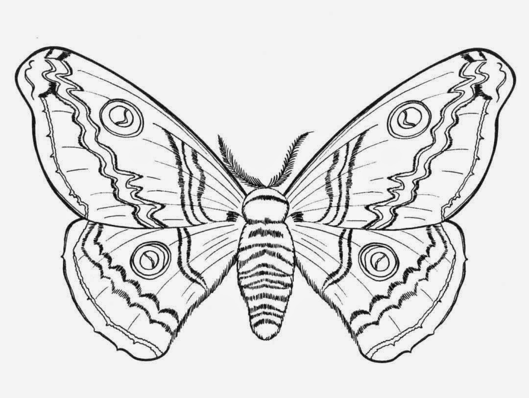 Butterflies for Coloring, part 8