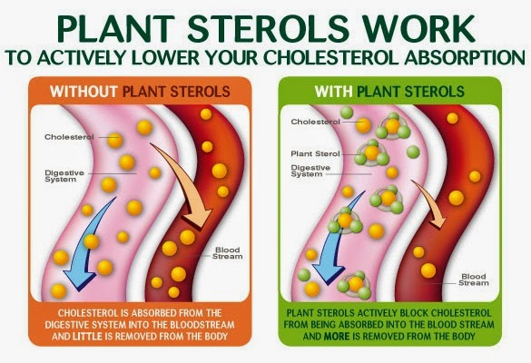 phytocol-st shaklee untuk kolesterol tinggi