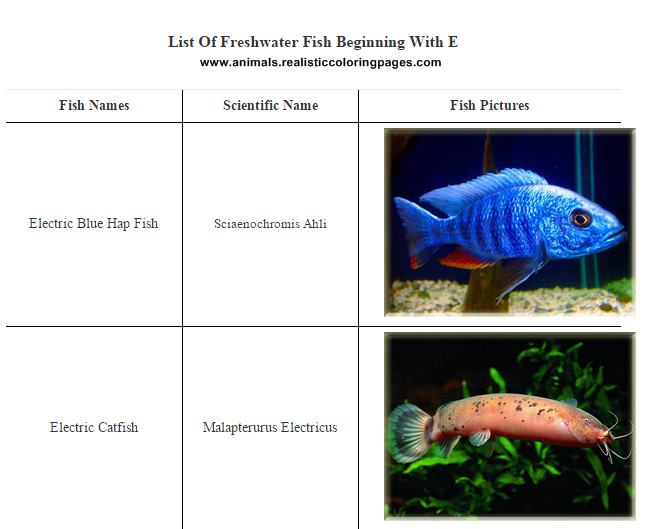 List of freshwater fish beginning with E